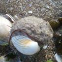 Strange sand ball