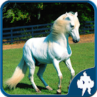 Jigsaw Puzzle Chevaux icon