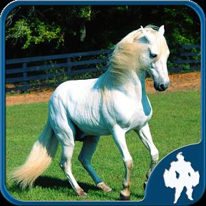 Лошади головоломки
