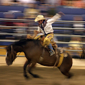 Rodeo News App icon