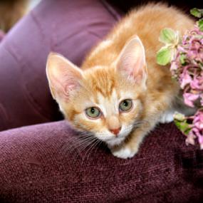 by Matt Gullick - Animals - Cats Kittens ( , #GARYFONGPETS, #SHOWUSYOURPETS )