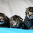 Three Cute Kittens Wallpaper