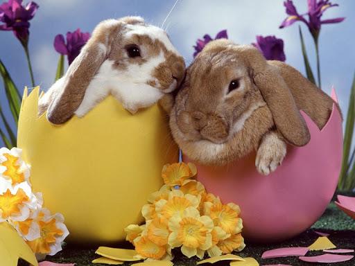 토끼 배경 화면