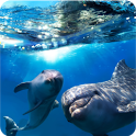 Magic Effect Dolphins LWP icon