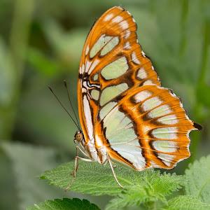 hisa-metuljev-31.jpg