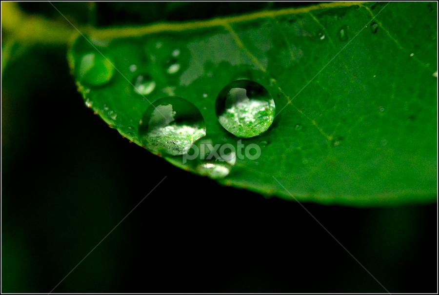 by Ravi Kashyap - Nature Up Close Natural Waterdrops ( water, waterdrop, green, nature up close, leaf,  )