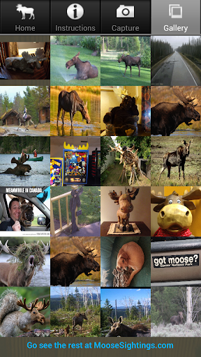 Moose Sightings