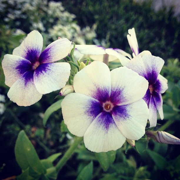 by Mackenzie Rosenlieb - Nature Up Close Other plants ( flowers, purple, photography, picoftheday,  )