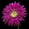 IMG_5609r-2.jpg