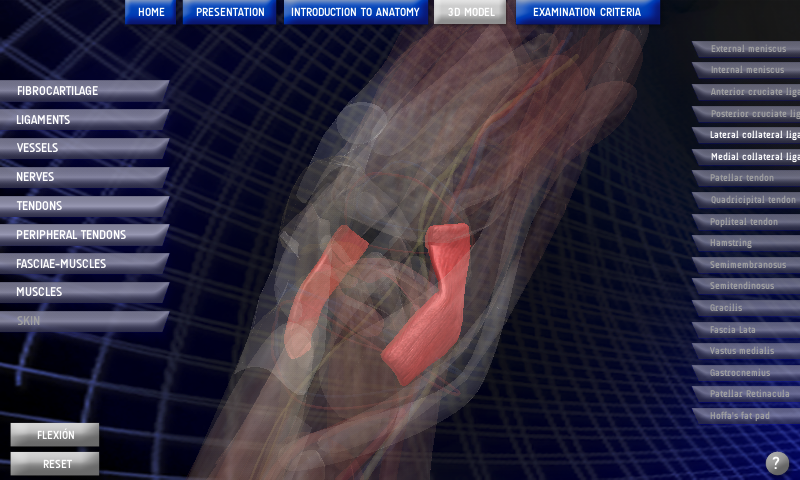 Anatomy Knee- screenshot