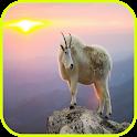 Goat Wallpaper icon