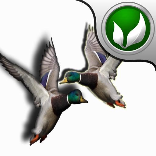Real Duck Hunter !!