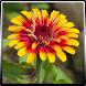 Garden Plants Growing Guide