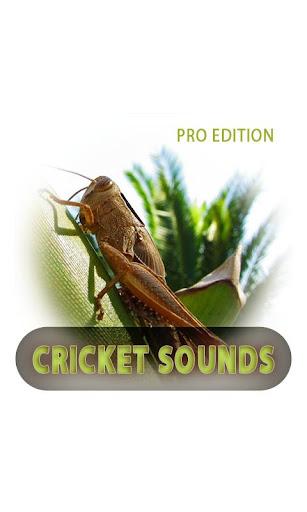 蟋蟀的聲音專業版