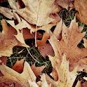 Autumn Wallpapers icon