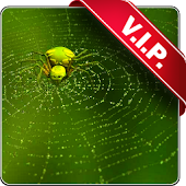 Web with spider live wallpaper
