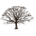 Oak Tree Winter Sticker icon