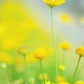 The Bee by Suryani Sabri - Flowers Flower Gardens ( bees, bee, sunflower, flowers, garden )