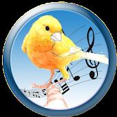 Malinois Canary Trainer