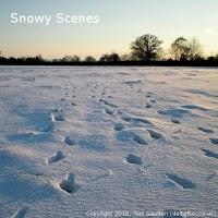 Snowy Scenes - Live Wallpaper 1.0