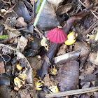 Purple Pinwheel Mushroom
