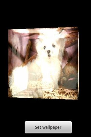 3D cute dog AA - screenshot