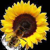 Bees! Live Wallpaper