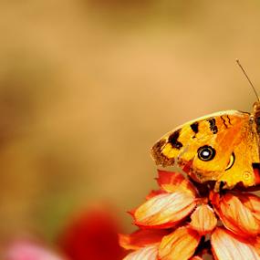 Nature's colorful gift by Sonali Majumder - Animals Insects & Spiders