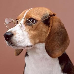 Freeapkdl Beagles Wallpapers for ZTE smartphones