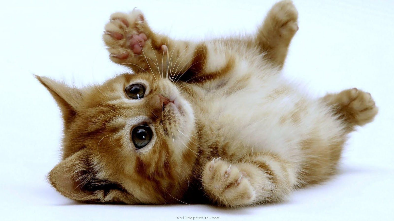 50 Cute Cute Kitten Backgrounds