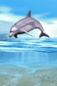 Dolphin Playing Live Wallpaper screenshot 0