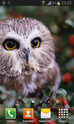 Owls Live Wallpaper