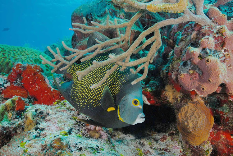 Scuba divers and snorkelers will find the waters around Cozumel teeming with sea life.