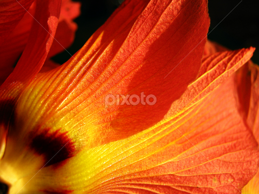 Sthal padma land lotus single flower flowers pixoto sthal padma land lotus by debarpan dhar flowers single flower mightylinksfo