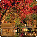 lake fall autumn LWP icon