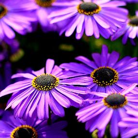 by Vijay Singh - Flowers Flower Gardens