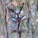 Tephra tussock moth