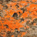 Fungus/Slime mold