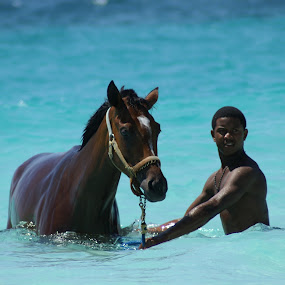 Two Studs by Susan Fries - Animals Horses ( water, blue, horse, swimming, man,  )