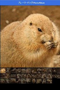 Healing prairie dog - screenshot thumbnail