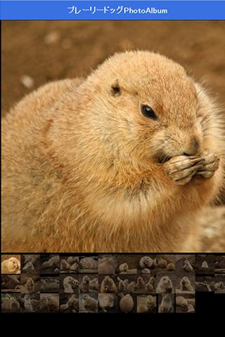 Healing prairie dog - screenshot