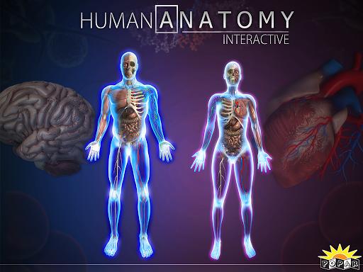 Popar Human Anatomy Chart