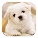 Dog Wallpaper icon