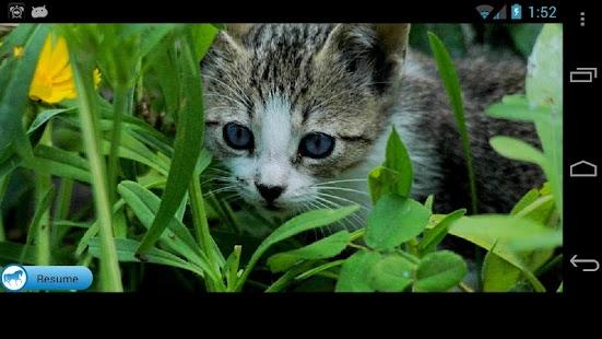 Kitten Solitaire- screenshot thumbnail