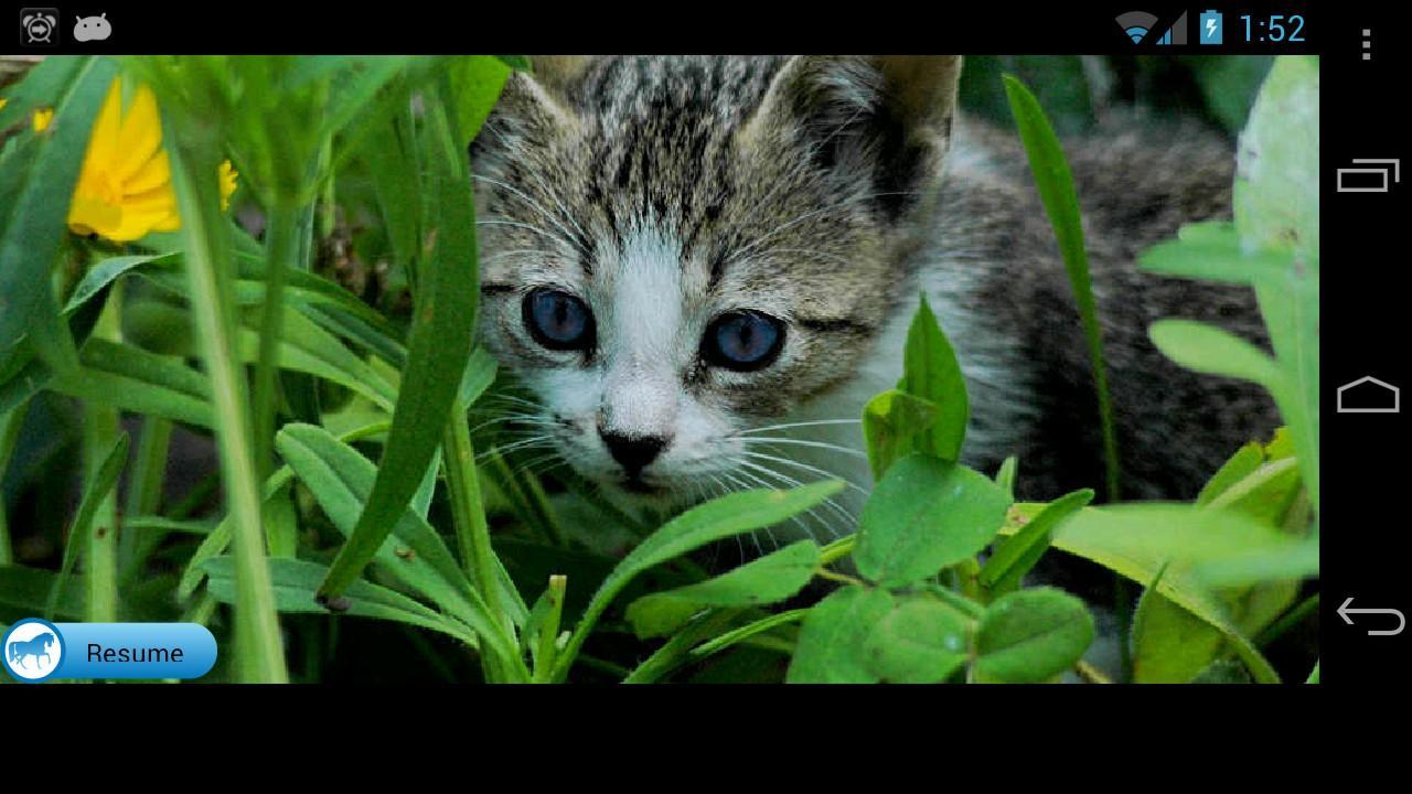 Kitten Solitaire- screenshot