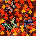 Red leaves & Butterfly