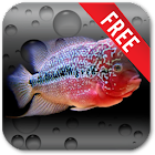 Aquarium Flowerhorn LWP icon
