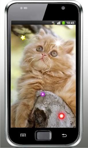 Kittens Voices live wallpaper