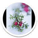 Snowfall Photos Live Wallpaper icon