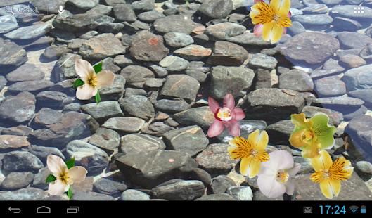 浮动的兰花